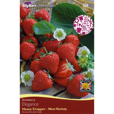 Taylors Elegance Strawberry Pack of 5