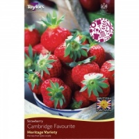 Taylors Cambridge Favourite Strawberry Pack of 5