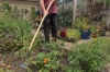 Kent & Stowe Carbon Steel Long Handled Edge Hoe