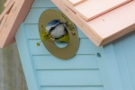 Bird Tables and Nesting Boxes
