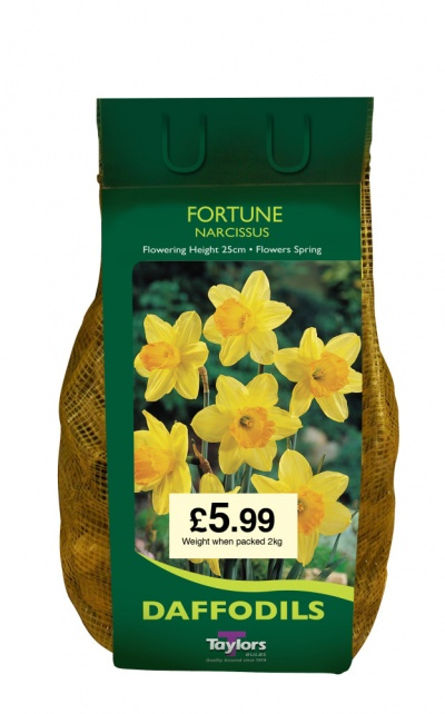NARCISSI FORTUNE CARRI-PACK