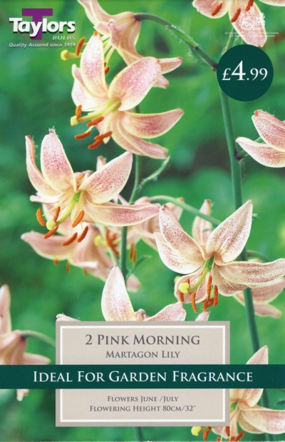 LILY PINK MORNING
