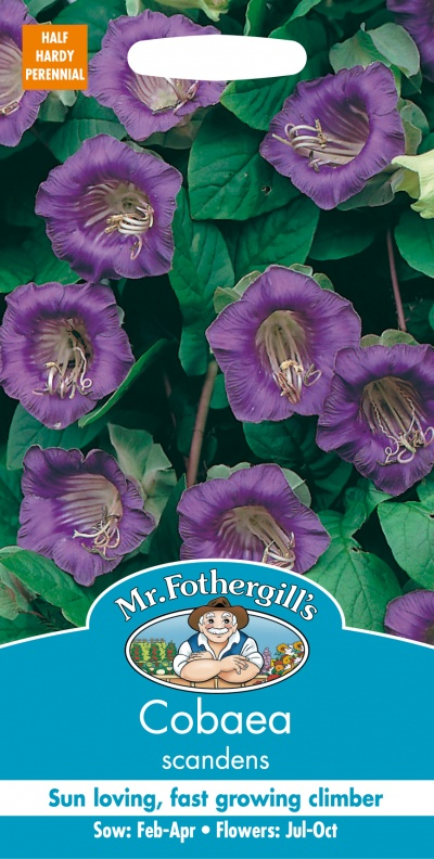 Mr Fothergills Cobaea Scandens Seeds