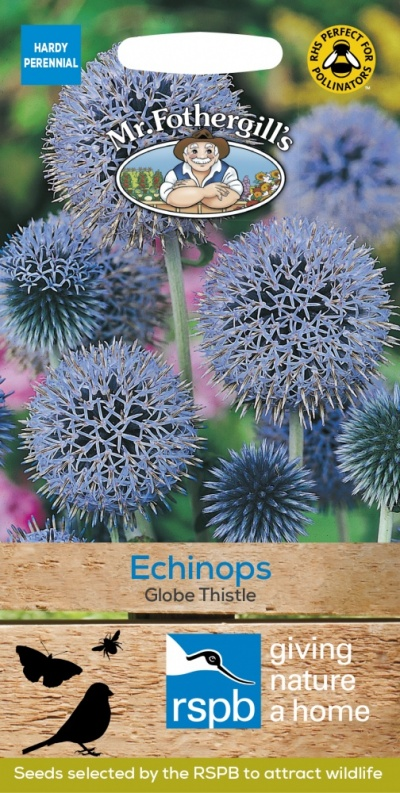 Mr Fothergills ECHINOPS Globe Thistle Seeds
