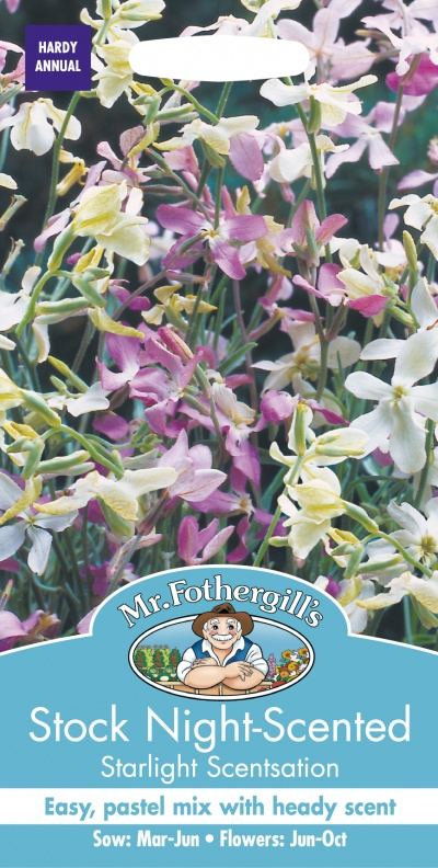 Mr Fothergills Stock Night Scented Starlight Scentsation Seeds