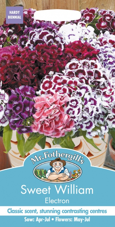 Mr Fothergills Sweet William Electron - Seeds