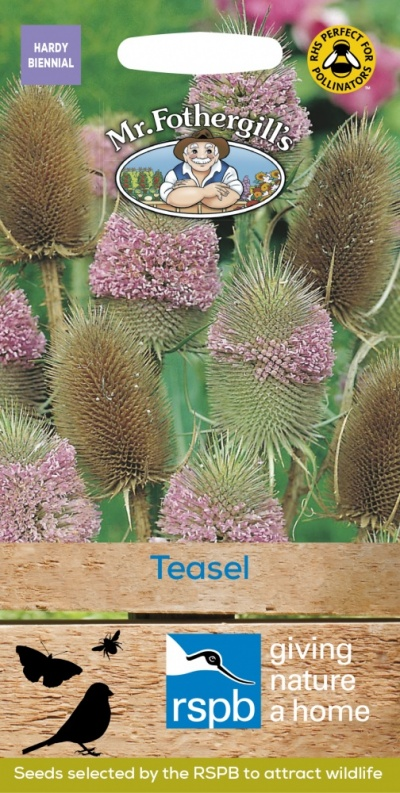 Mr Fothergills Teasel Seeds