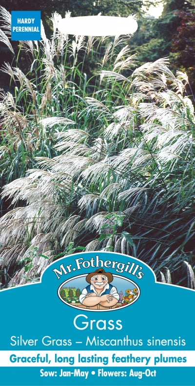 Mr Fothergills Grass Silver Grass Mis Canthus Sinensis Early Hybri Seeds