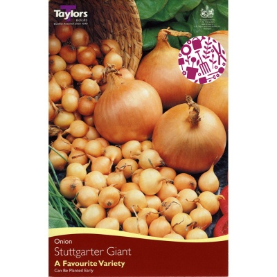 Taylors Stuttgarter Giant Onion Sets Pack of 50