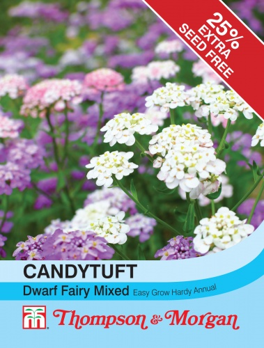 T&M Candytuft Dwarf Fairy Mixed