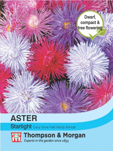 T&M Aster Starlight Mixed
