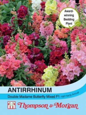 T&M Antirrhinum Double Madam Butterfly Mixed