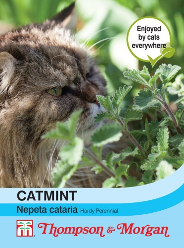 T&M Catmint