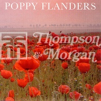 Poppy 'Flanders' Seeds - Thompson & Morgan