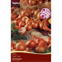 50 Sets For Spring Planting Centurion Onions Taylor/'s Bulbs