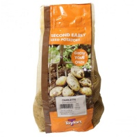 Taylors Bulbs Charlotte Seed Potatoes 2kg Carry Net