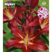 Taylors Commitment Lily 2 Bulb Pack