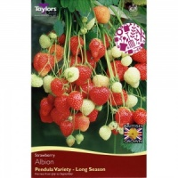 Taylors Albion Strawberry Pack of 3